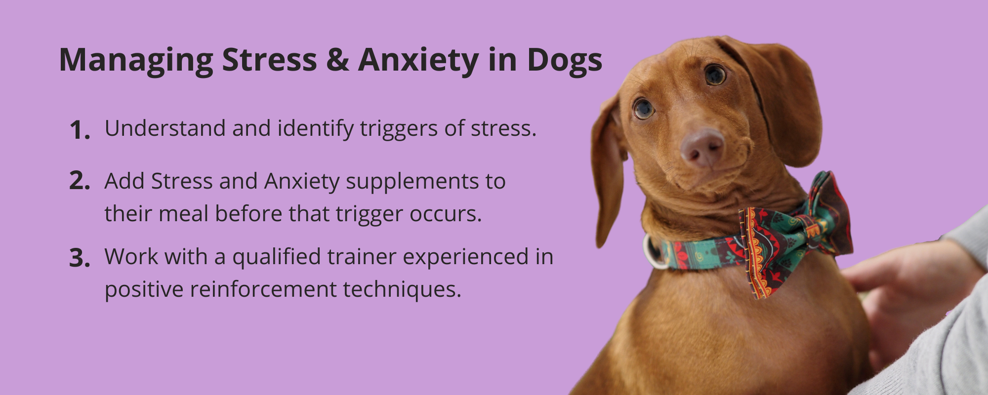 Three steps to help your dog break the cycle of stress and anxiety