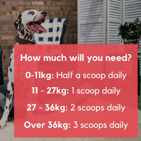 dosage recommendation hip and joint for dogs