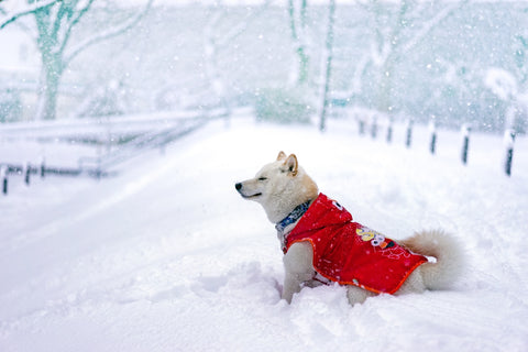 Happy winter dog, dog in snow, dog playtime, Winter dog
