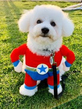 dog wearing costume outfit