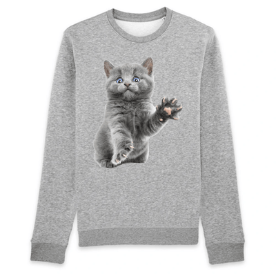 pull chaton couleur gris