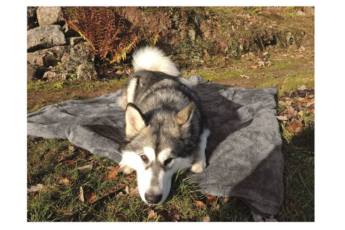 Multimat Travel Throw Dog Rug