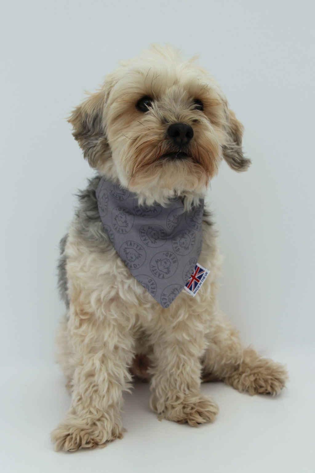 Yorkie poo in tatty head grey baby pink dog bandana