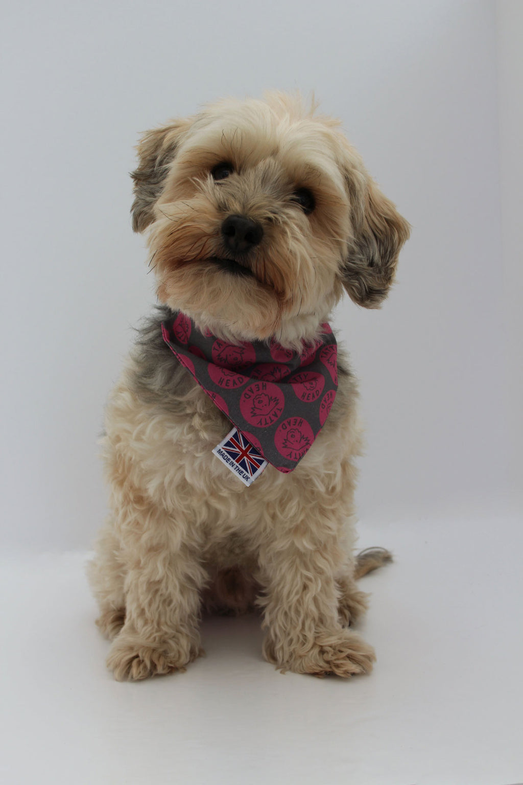 Hugo the Yorkie poo in the Tatty Head pink polka dot pattern over collar dog bandana full