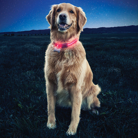 Nite Dawg® LED Dog Collar