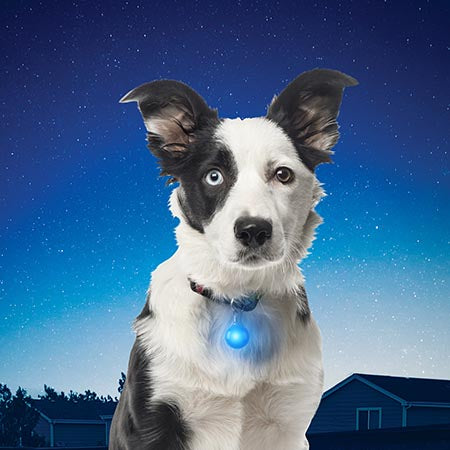 SpotLit™ LED Collar Light