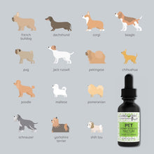 Load image into Gallery viewer, Canna Hemp - Paws Pet Tincture - Regular - 30mL