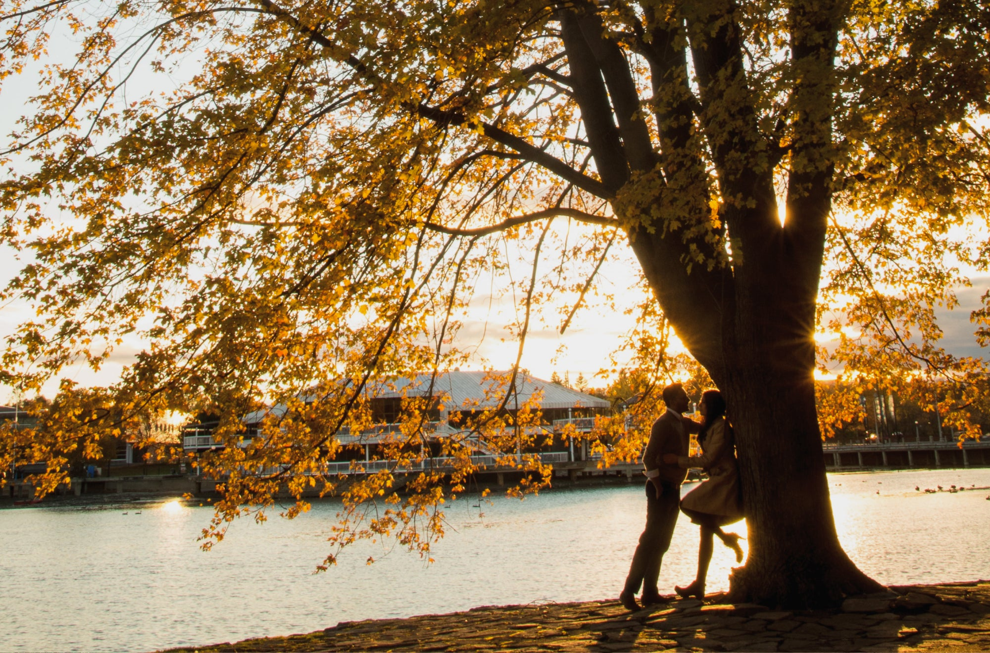 A couple kisses under a tree, showing their love while also benefiting the environment | Talsam