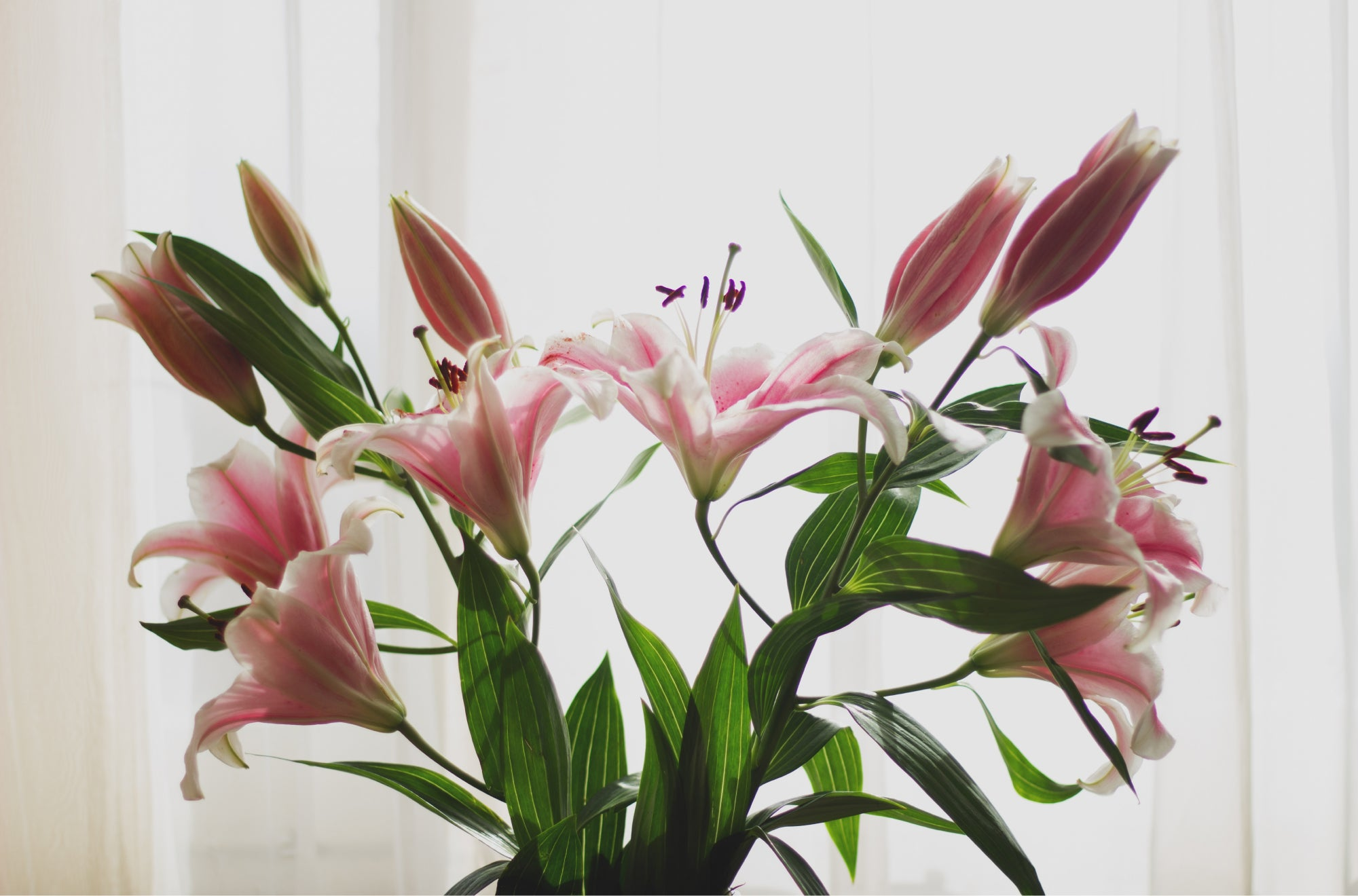 Lilies symbolize fertility, hope for the future, birth, and renewal. They're ideal for birthdays | Talsam