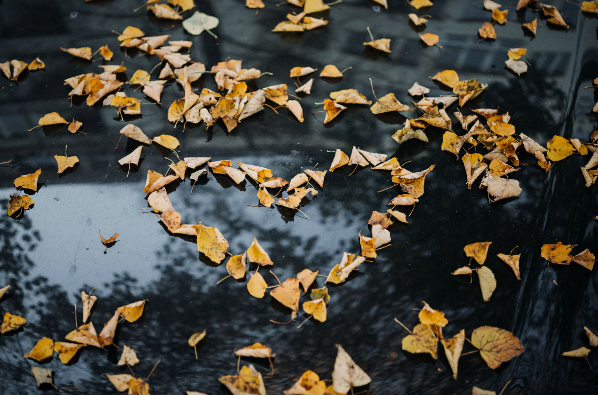 Heart-shaped leaves are a romantic way of saying 'I Love You' | Talsam