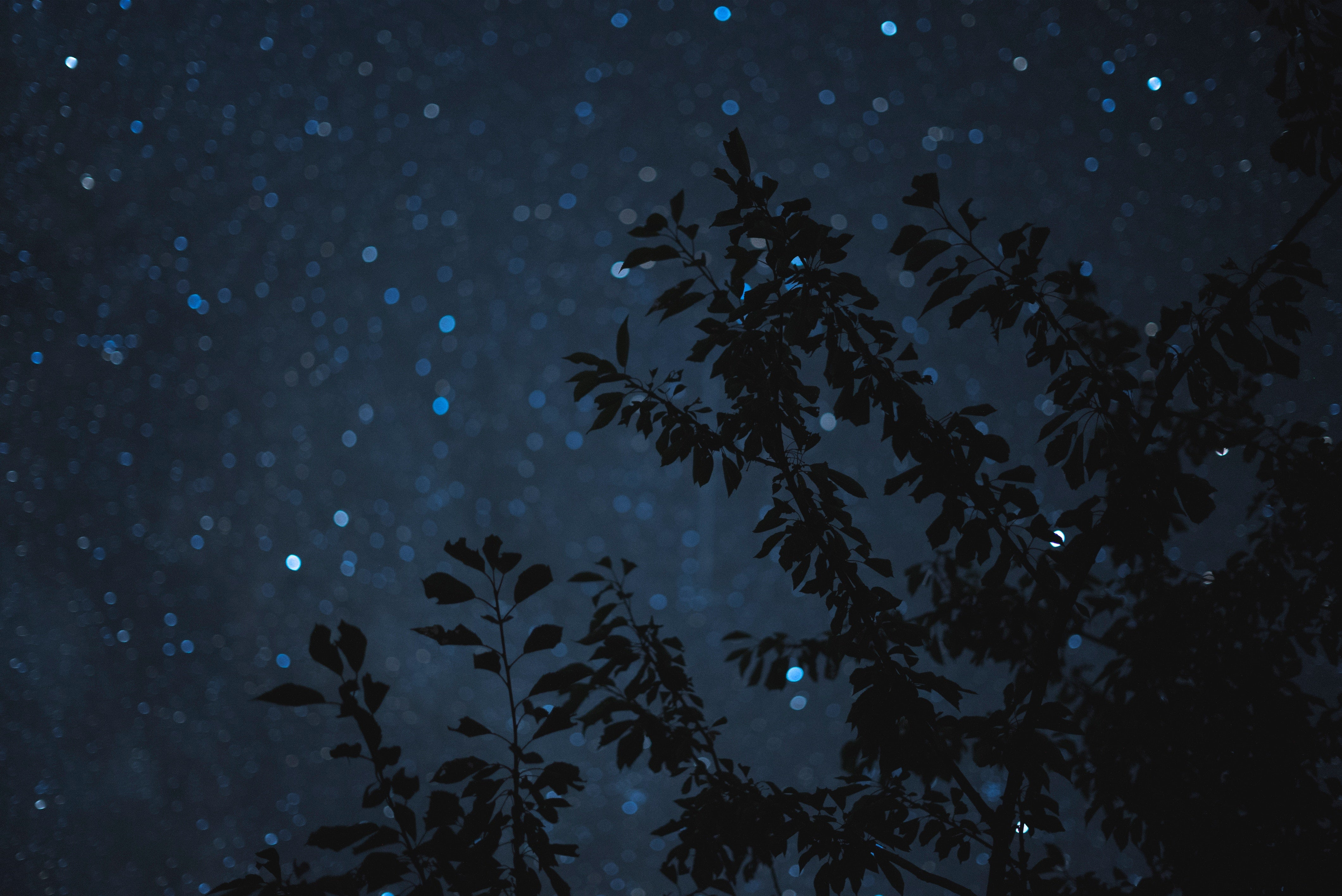 Leaf silhouette on a dark starlit night, telling the myths and legends of the constellation Lyra and its brightest star, Vega  | Talsam