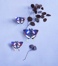 Set of 3 Swallowtail Butterflies - Wall Decoration