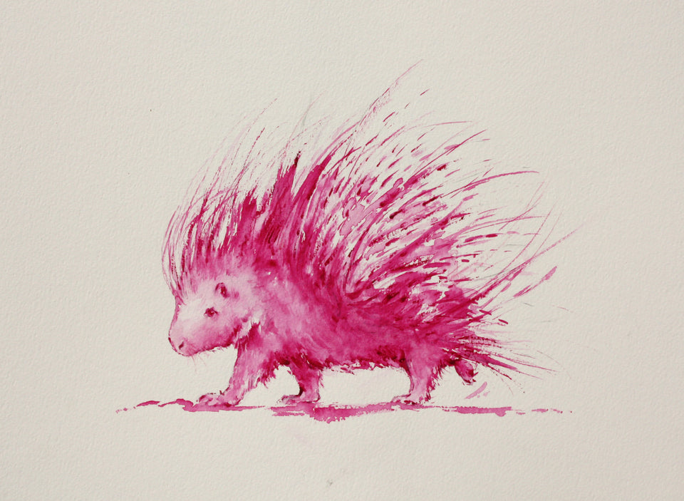 Pink Porcupine - Limited Edition Print