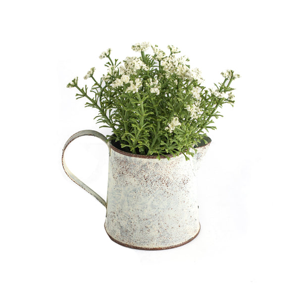 Potted Pitcher with Cream Buds