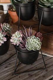"7""H Flocked Succulent"