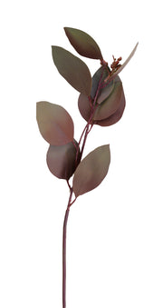 Burgundy Green Seeded Eucalyptus Stem