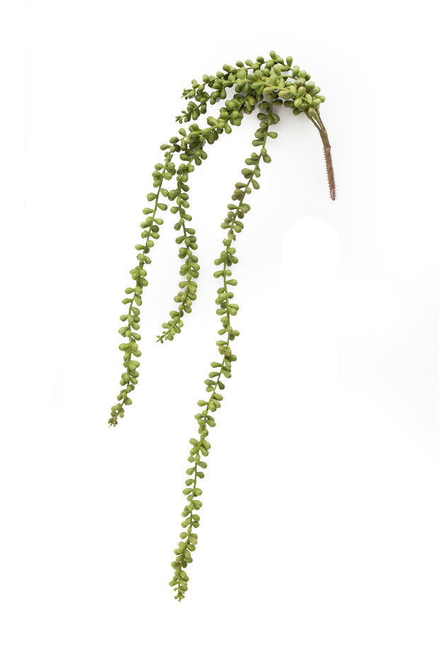 String of Pearls Cascading Succulent