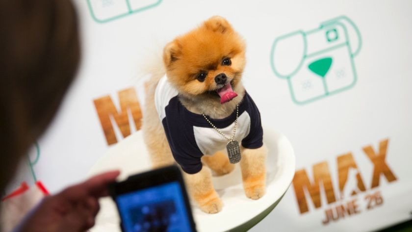 Top 10 Articles on How To Make Your Pup Instagram Famous