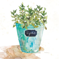 Potted Thyme Canvas Prints