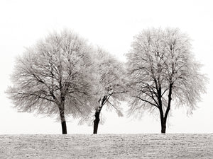 Three Trees Canvas Art