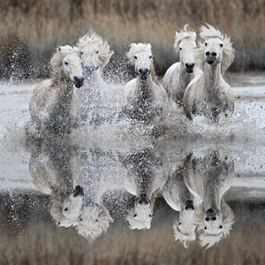Camargue Canvas Art