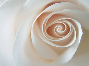 White Rose Swirl Canvas Art