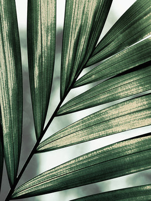 Palm Frond Canvas Art