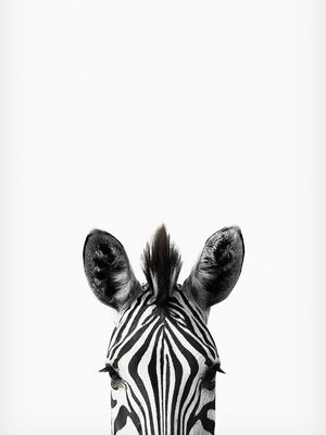 Peeking Zebra Canvas Art