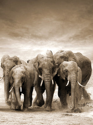 Sepia Herd Canvas Art