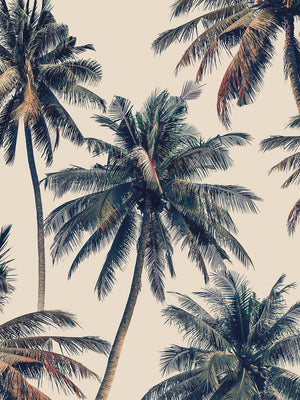 Vintage Palms Canvas Prints