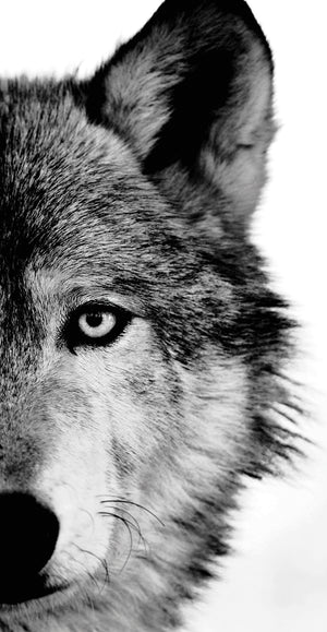 Wolf Crop Canvas Art
