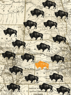 Where the Buffalo Roam Canvas Prints
