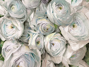 White Ranunculus Canvas Art