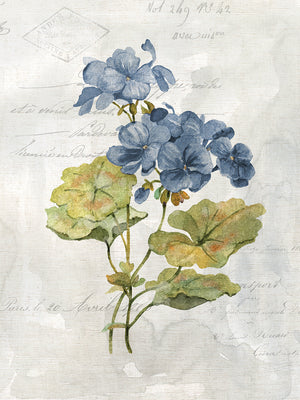 Blue Linen Geranium Canvas Art