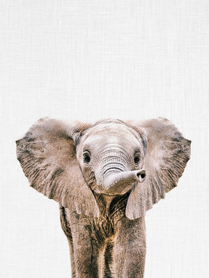 Baby Elephant Canvas Print