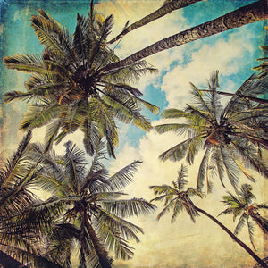 Kauai Island Palms Canvas Art