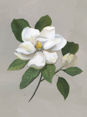 Botanical Magnolia Canvas Art