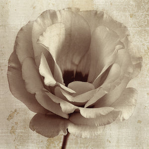Sepia Flower on Sepia 02 Canvas Art
