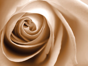 Sepia Rose 01 Canvas Art