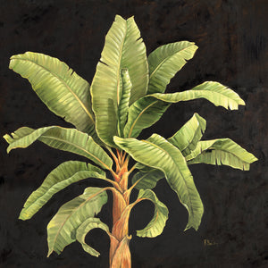 Parlor Palm II Canvas Art