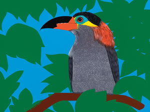 Toucanet Canvas Art
