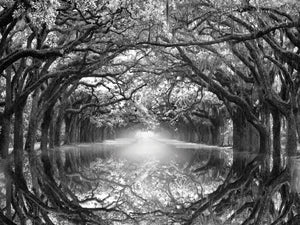 Oak Alley Reflection Canvas Art