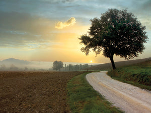 Tuscan Farm Road #1 Canvas Prints
