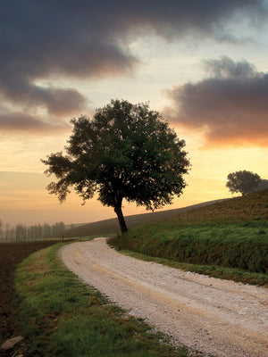 Tuscan Farm Road Sunrise #2 Canvas Prints