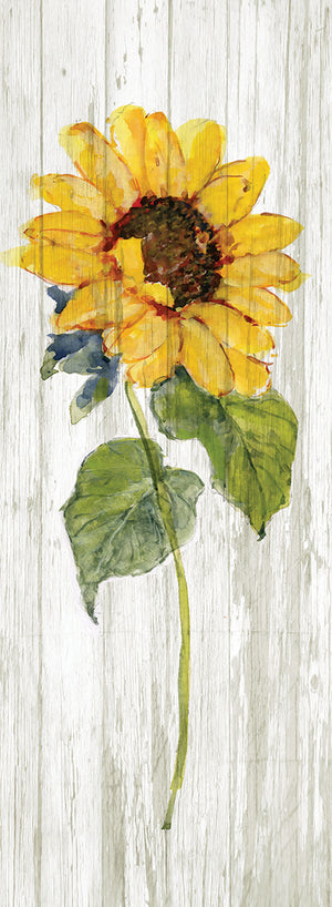 Sunflower in Autumn I Canvas Print