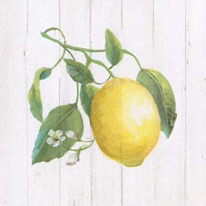 Lemon Fresh I Canvas Print
