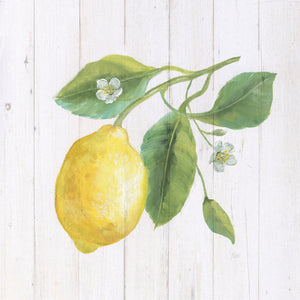 Lemon Fresh II Canvas Print