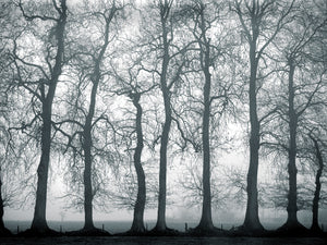 Silver Mists Canvas Print
