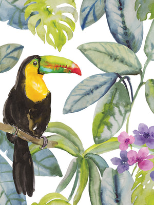 Toucan Seek Canvas Print