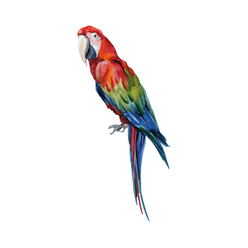 Parrot Wall Sticker